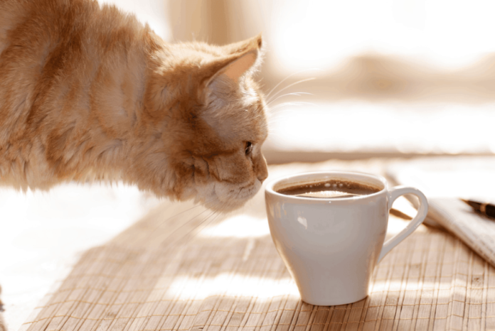 Can Cats Drink Tea?